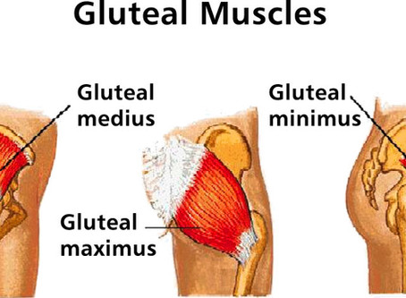 Understanding your Gluteal muscles