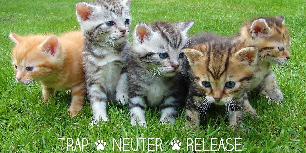 HSNT Community Cat T-N-R Program