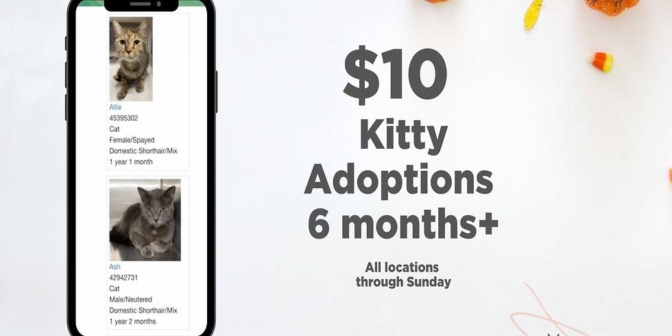 $10 Kitty Adoption Event