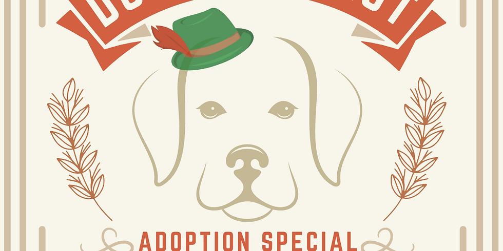 Dogtoberfest Adoption Special