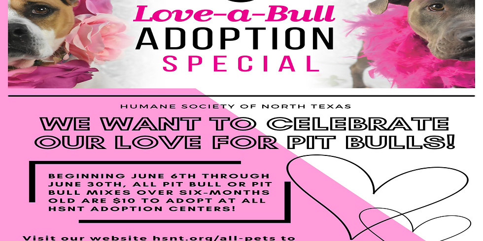 Love-a-Bull Adoption Special
