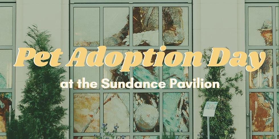 Pet Adoption Day at the Sundance Pavilion