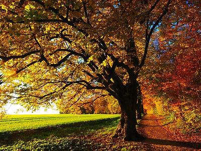 Paysage de campagne en automne