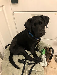 Ember laundry helper.jpg