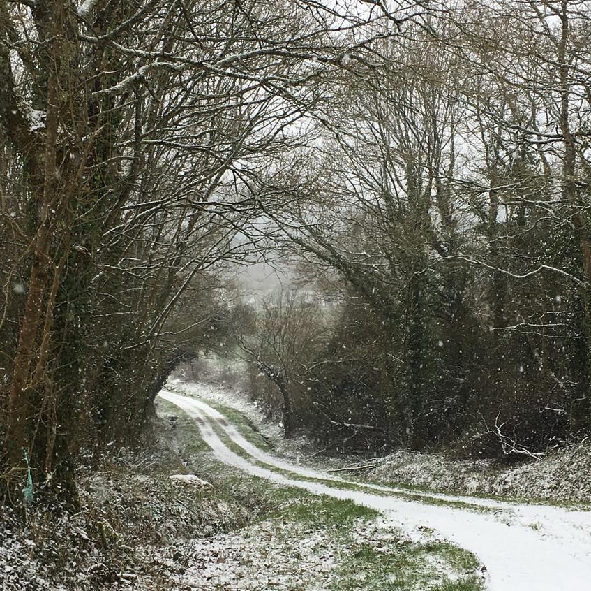 Le chemin qui longe notre bois