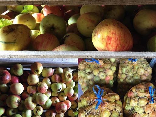 Les pommes de La Halte de Coat Carrec