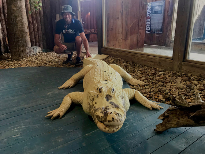 Alligators in Florida Lakes and their role in Towed Water Sports