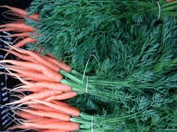 carrot_bunch.jpg