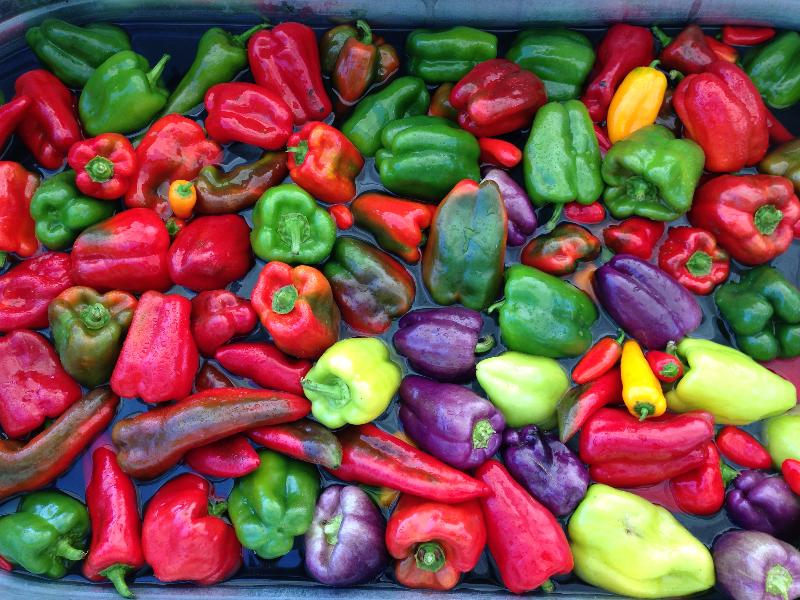 pepper_water.jpg