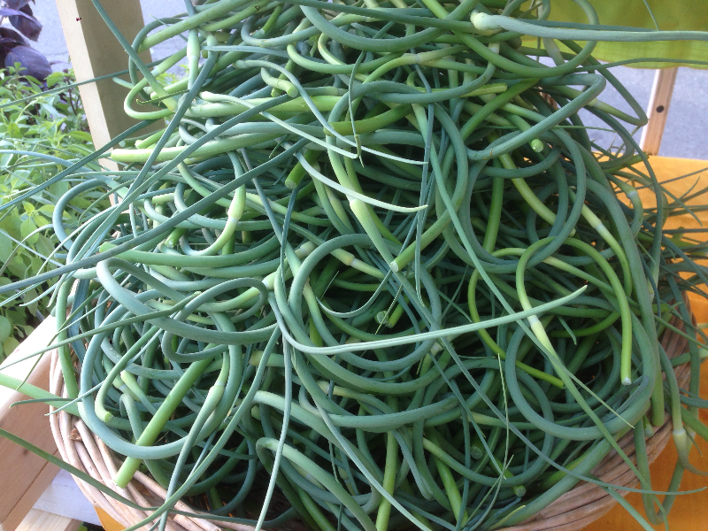 scapes.jpg