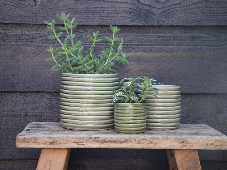Rib pot green.jpg