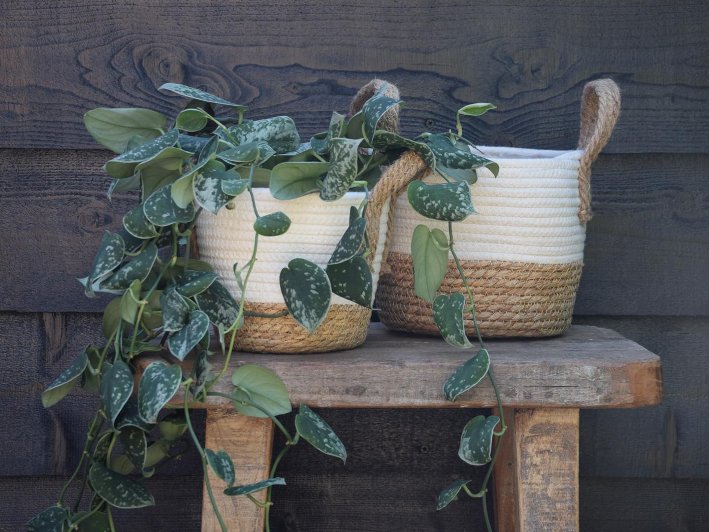 Straw basket white.jpg