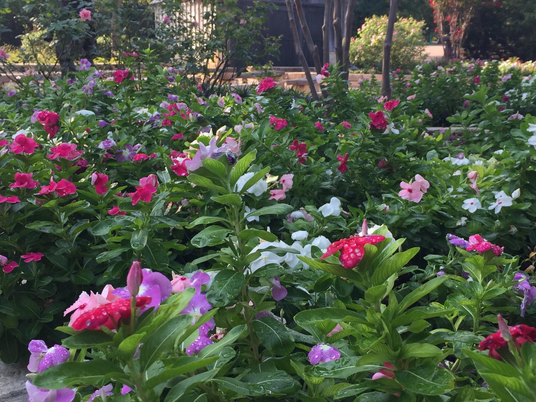 Calreen Bright Arboretum