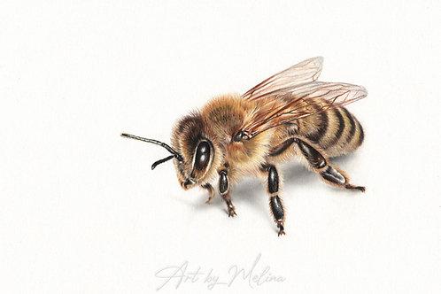 """Honey Bee"" FineArt Print A4"