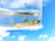 Snapseedオイカワ.jpg