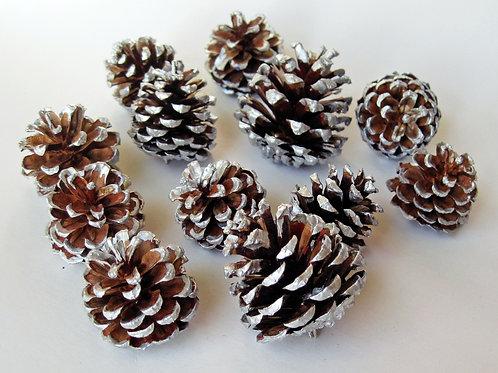 50 Silver Edged Small Pine Cones