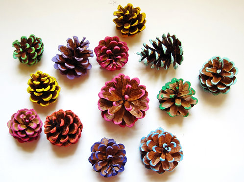 50 Medium Colored Edged Pine Cones