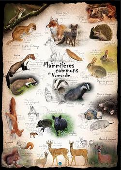 Image_poster_mammifères