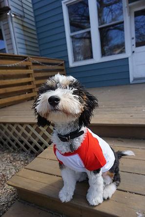 Baxter:Bruno2.JPG