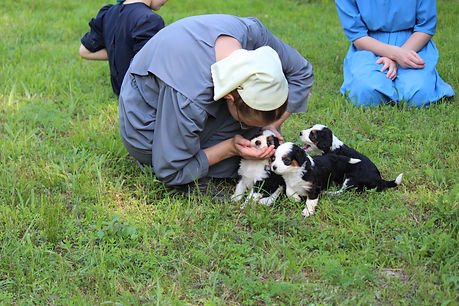 Amish girls with bernedoodle puppies