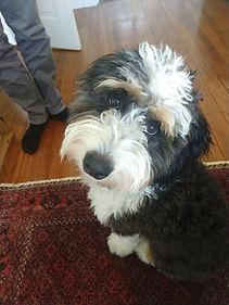 Baxter:Bruno3.jpg