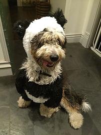 Baxter:Bruno1.jpg