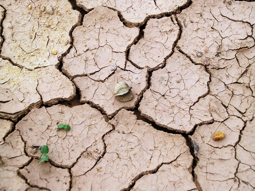 Dry Soil - Photo by icon0.com