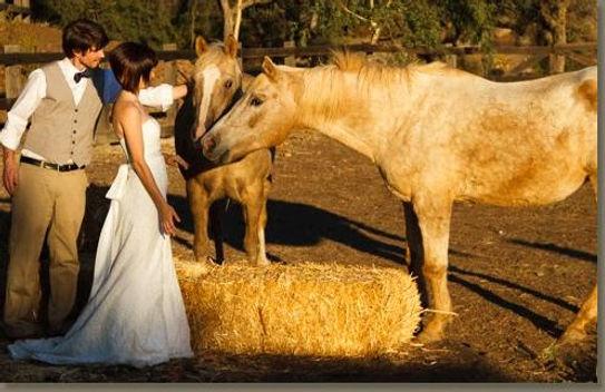 Bradford Ranch Horse.jpeg