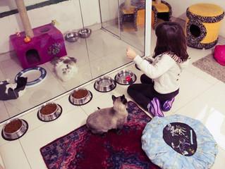 Dicas para alimentar bem seu gato