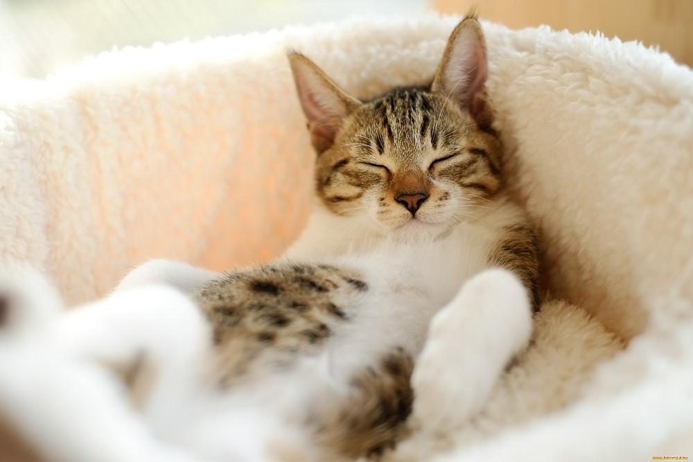 Imagem disponível em: http://www.zastavki.com/pictures/originals/2013/Animals___Cats__038251_.jpg