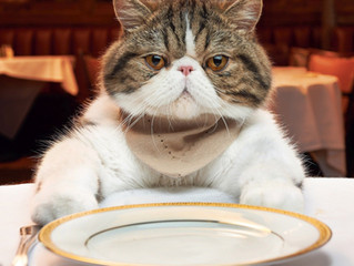 O que o seu gato está comendo?