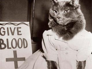 Meu gato pode doar sangue?