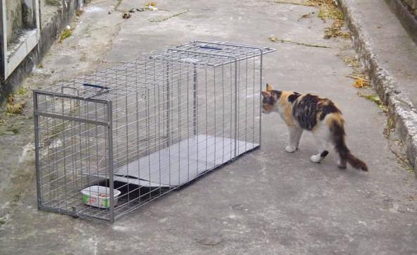 Fonte: http://catsnecropolis.blogspot.com.br/2010/08/dose-dupla.html