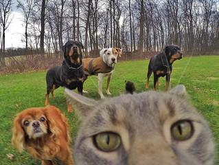 """""""Vem cá, vamos fazer uma selfie!"""""""