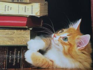 A origem dos gatos domésticos