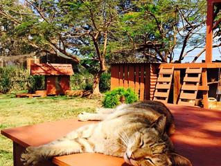O paraíso dos gatos no Havaí!