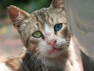 Maus tratos em animais. O que fazer?