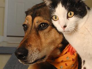 Posso adotar um gato se eu já tiver um cão? Ou vice-versa?