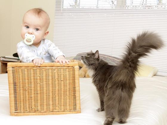 Fonte da imagem: http://guiadobebe.uol.com.br/media/34ad50a078034005bf59c303a94e106e/01/bebe-com-chupeta-na-boca-dentro-de-um-cesto-e-um-gato-curioso-olga-bogatyrenko-shutterstock-00000000000040AF.jpg
