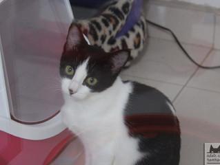 Gatinha para adoção: Bela (recatada) e do seu lar!