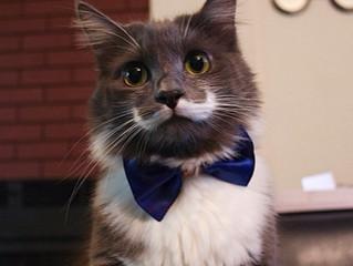 """Moustache! O """"bigode"""" e sua real importância"""