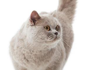Diabetes em gatos, saiba mais sobre.