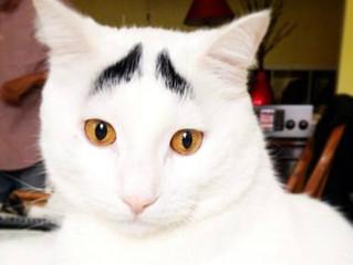 Gatos famosos para seguir no Instagram