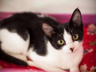 Câncer em gatos: os tipos mais comuns e suas causas