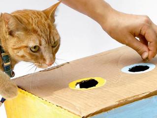 Enriquecimento ambiental para o bem-estar e saúde felina