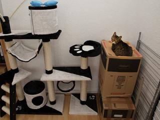 Faça você mesmo: objetos para seu gatinho