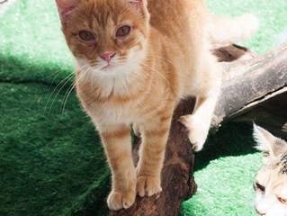 Primeiros socorros para gatos