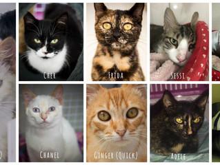 Adote Um Ronrom e os gatos de Pomerode