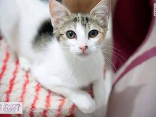 Gatinhos para adoção - Ágata