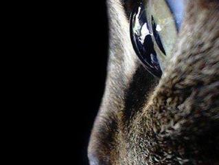 Problemas oftalmológicos mais comuns nos gatos